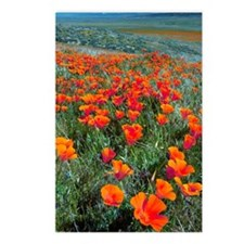 Californian Poppies (Esch Postcards (Package of 8)
