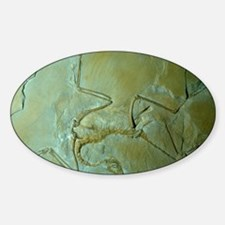 Archaeopteryx fossil Decal