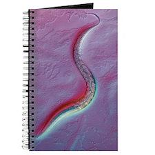 C. elegans worm, light micrograph Journal