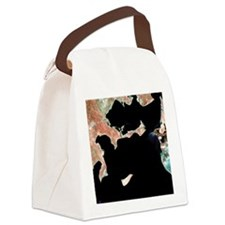 Aral Sea, satellite image, 1973 Canvas Lunch Bag