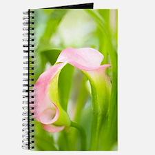 Calla Lily (Zantedeschia aethiopica) Journal