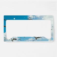Arctic terns in flight License Plate Holder
