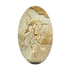 Archaeopteryx fossil, Berlin speci Oval Car Magnet