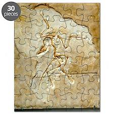 Archaeopteryx fossil, Berlin specimen Puzzle