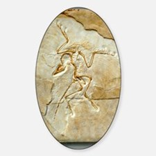 Archaeopteryx fossil, Berlin specim Decal