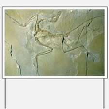 Archaeopteryx fossil Yard Sign
