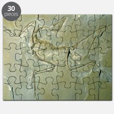 Archaeopteryx fossil Puzzle