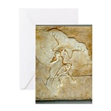 Archaeopteryx fossil, Berlin specime Greeting Card