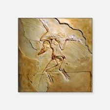 "Archaeopteryx fossil, Berli Square Sticker 3"" x 3"""