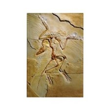 Archaeopteryx fossil, Berlin spec Rectangle Magnet