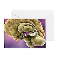Brain anatomy, 3D artwork Greeting Card