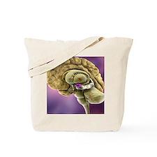 Brain anatomy, 3D artwork Tote Bag