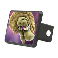 Brain anatomy, 3D artwork Hitch Cover