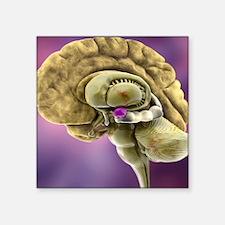 "Brain anatomy, 3D artwork Square Sticker 3"" x 3"""
