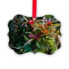 Bromeliad plant Ornament