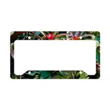 Bromeliad plant License Plate Holder