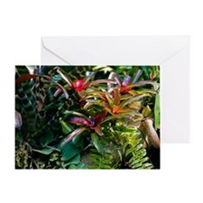 Bromeliad plant Greeting Card