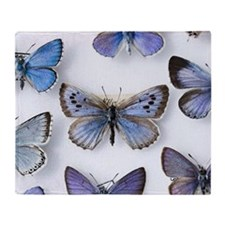 British large Blue butterfly colln.  Throw Blanket