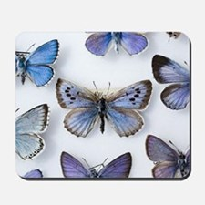 British large Blue butterfly colln. 1865 Mousepad
