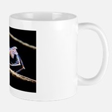 Amphipod crustacean Mug