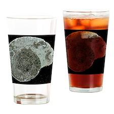 Ammonite fossil, Hudsonoceras proet Drinking Glass