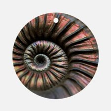 Ammonite fossil Round Ornament