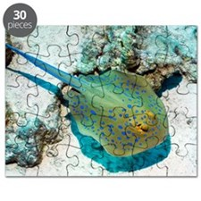 Bluespotted ribbontail ray Puzzle