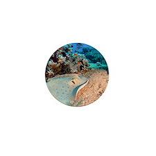 Blue-spotted stingray Mini Button