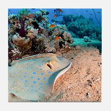 Blue-spotted stingray Tile Coaster