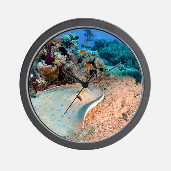 Blue-spotted stingray Wall Clock