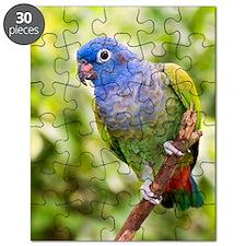 Blue-headed parrot Puzzle