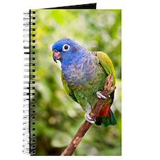 Blue-headed parrot Journal