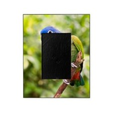 Blue-headed parrot Picture Frame