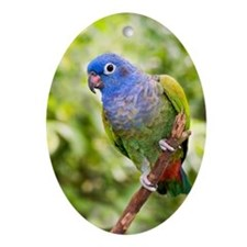 Blue-headed parrot Oval Ornament