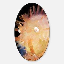 Amphipod crustacean Sticker (Oval)