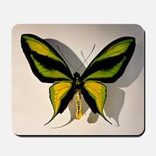 Birdwing Butterfly Ornithoptera paradise Mousepad