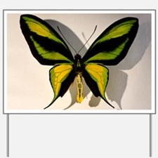 Birdwing Butterfly Ornithoptera paradise Yard Sign