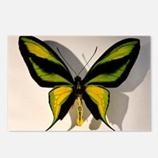 Birdwing Butterfly Ornith Postcards (Package of 8)