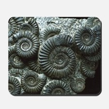 Ammonite fossils Mousepad