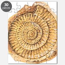 Ammonite fossil, artwork Puzzle