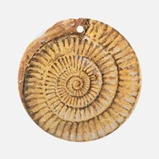 Ammonite fossil, artwork Round Ornament