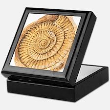 Ammonite fossil, artwork Keepsake Box