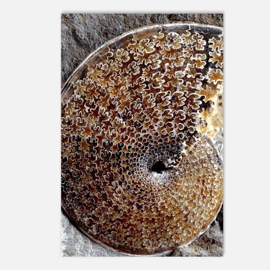 Ammonite fossil Postcards (Package of 8)
