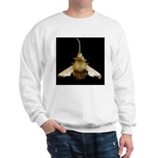 Bee hawk moth, SEM Sweatshirt