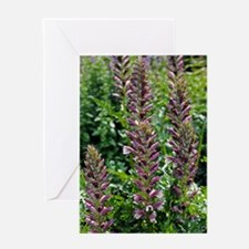 Bears Breeches (Acanthus sp.) Greeting Card