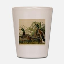 Mallard duck Audubon Bird Vintage Print Shot Glass