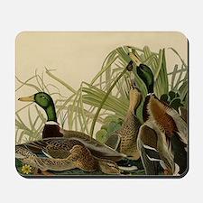 Mallard duck Audubon Bird Vintage Print Mousepad