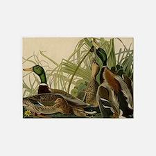 Mallard duck Audubon Bird Vintage P 5'x7'Area Rug