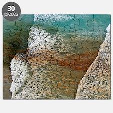 Algal bloom Puzzle