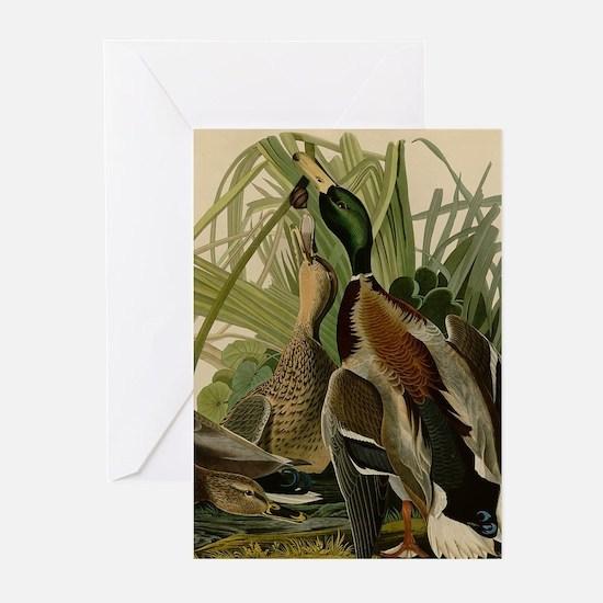 Mallard duck Audubon Bird Vintage P Greeting Cards